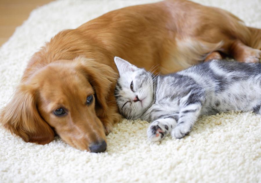 Quer adotar um pet? Shopping Benfica sedia feira de adoção, nesse sábado (30)
