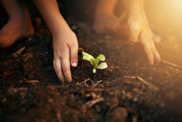 Secretaria do Meio Ambiente  promoverá atividades comemorativas para o mês do Meio Ambiente