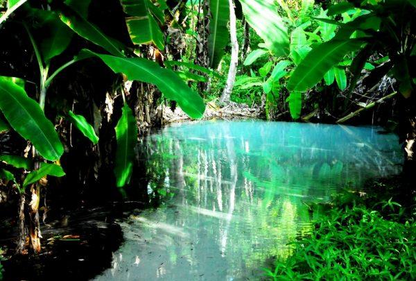 Cinco destinos para explorar o ecoturismo no Brasil