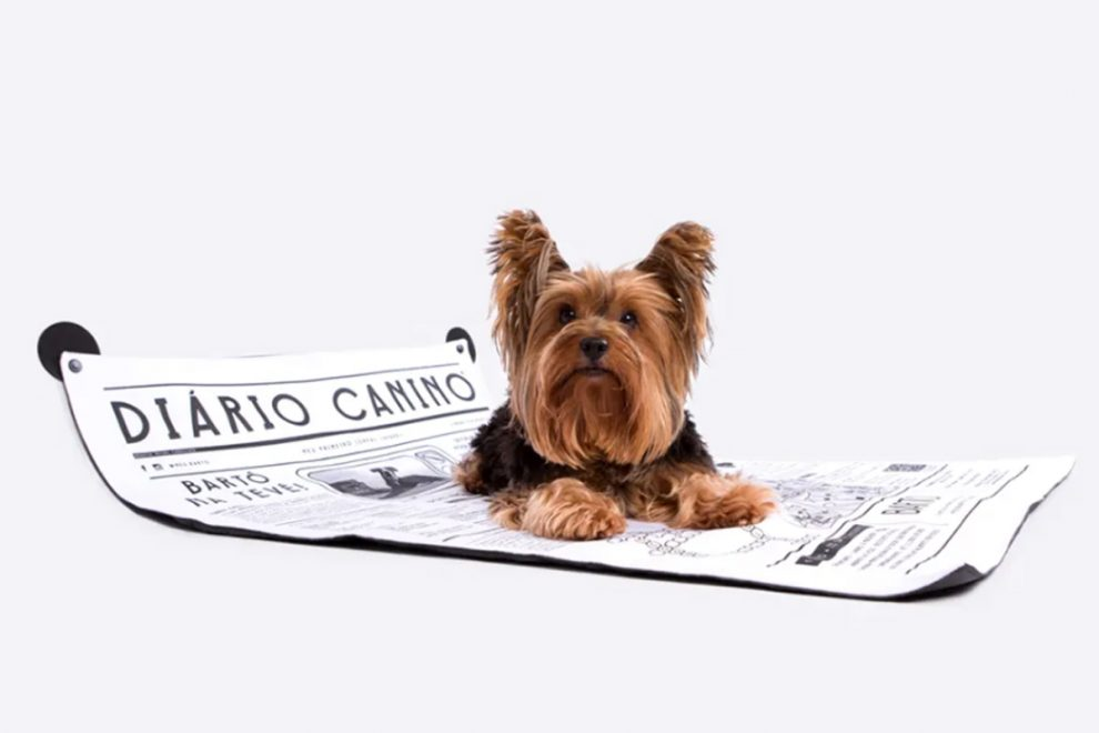 Conheça quatro marcas sustentáveis para o seu pet