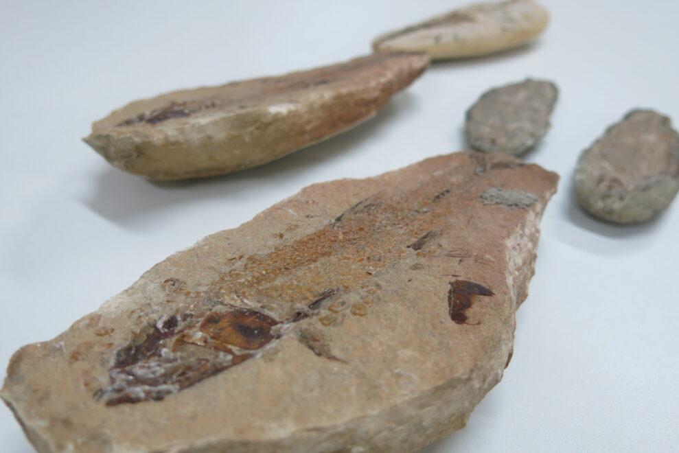 Projeto digital auxilia na preservação dos fósseis encontrados na Chapada do Araripe