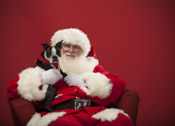 Papai Noel do Benfica recebe animais de estimação no Trono Pet