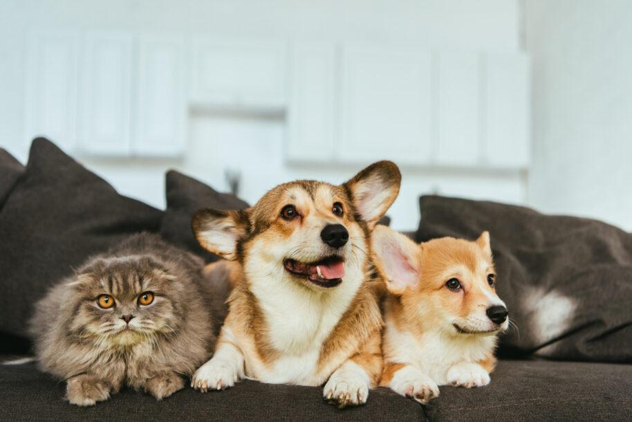 Saiba como escolher o estofado ideal para casa com pets