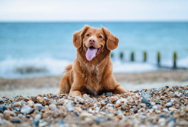 Confira dicas de como viajar com pets em segurança