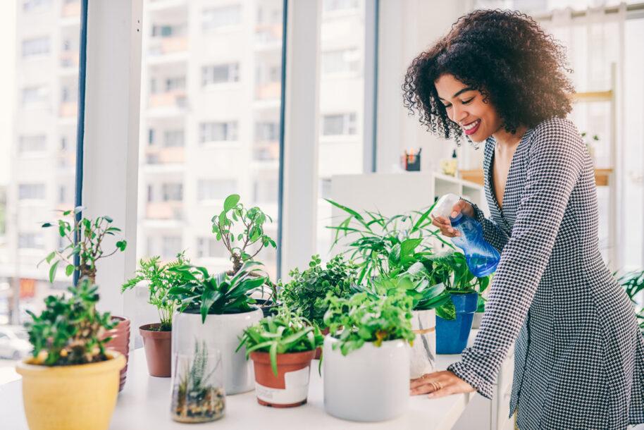Como proteger as plantas dos ventos da primavera