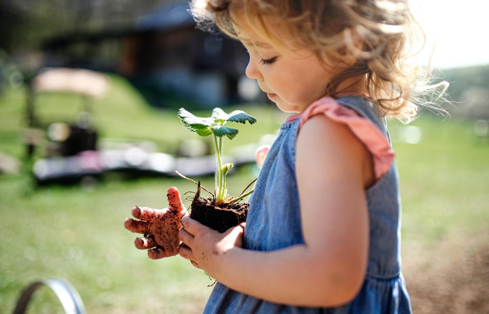 Sustentabilidade: Aprenda a fazer escolhas diárias que ajudam o planeta