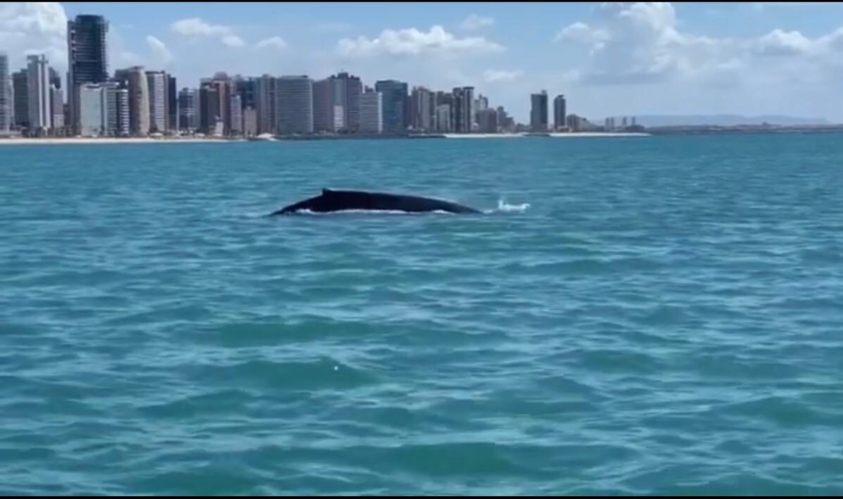 Baleia jubarte é vista na costa de Fortaleza
